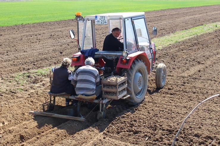 Traktor Setva-krompira-u-Vilusima-foto-Milan-Pilipovic