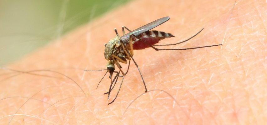 Jak odstraszyć komary? Poznaj domowe sposoby babć!