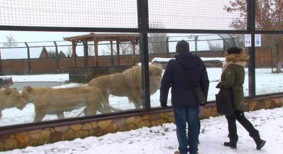 ZOO w Borysewie czeka na zwiedzających również zimą 2020
