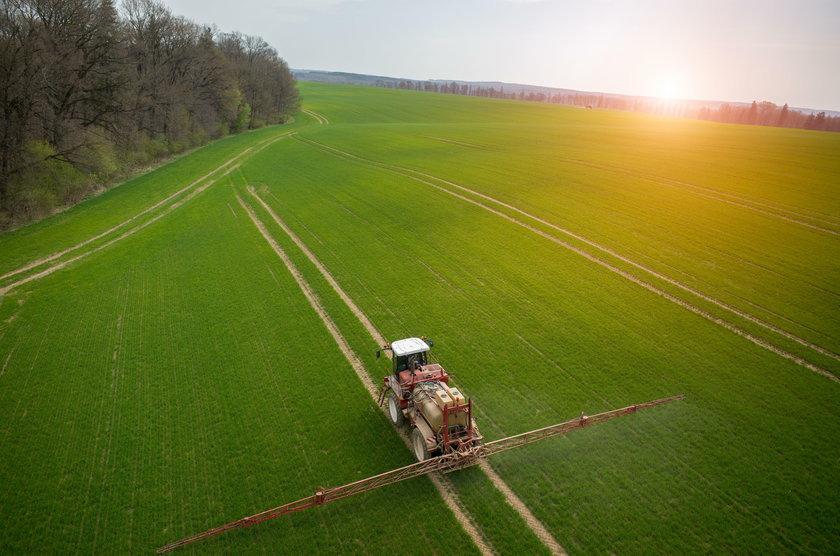 Duże pole