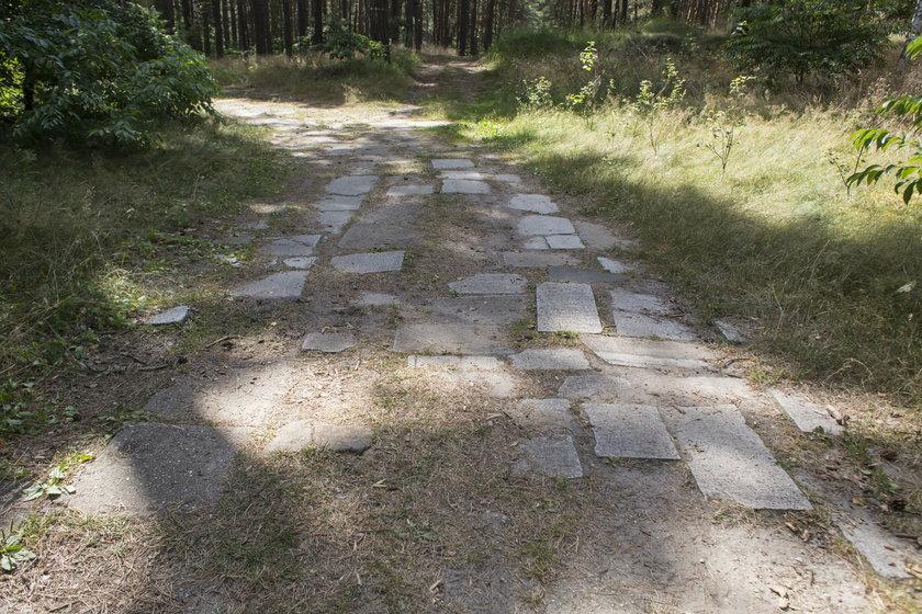 Płyty nagrobne na leśnej drodze