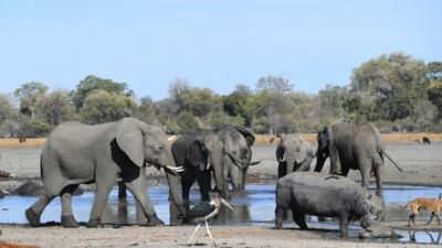 Botswana to review its elephant management plan following mysterious deaths