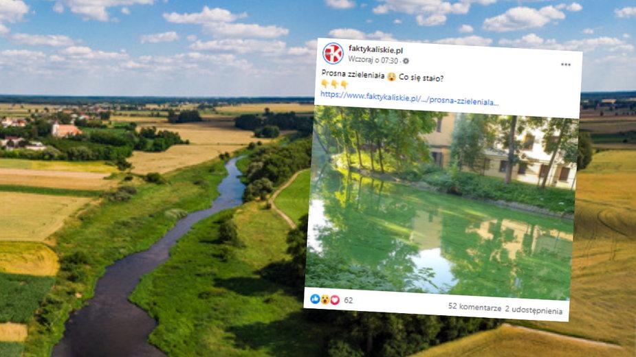 Rzeka Prosna zmieniła kolor na zielony