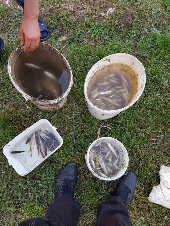 Građani pozvali ribočuvare