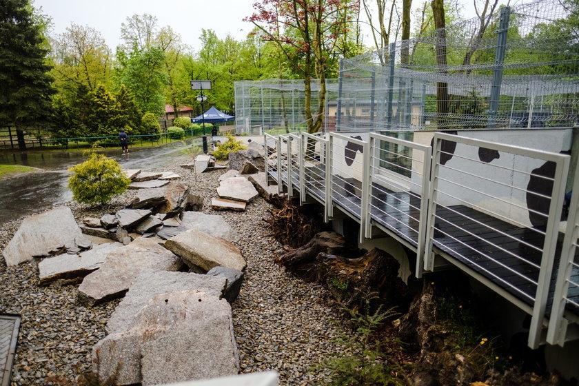 Nowy wybieg dla panter śnieżnych można już podziwiać w chorzowskim zoo