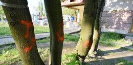 Skandal! Wytną 400 drzew na osiedlu!