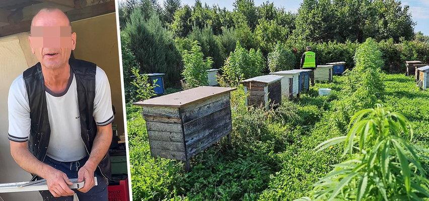 Pszczelarz spod Kętrzyna leczył pszczoły marihuaną. Jednej rzeczy nie dopilnował!