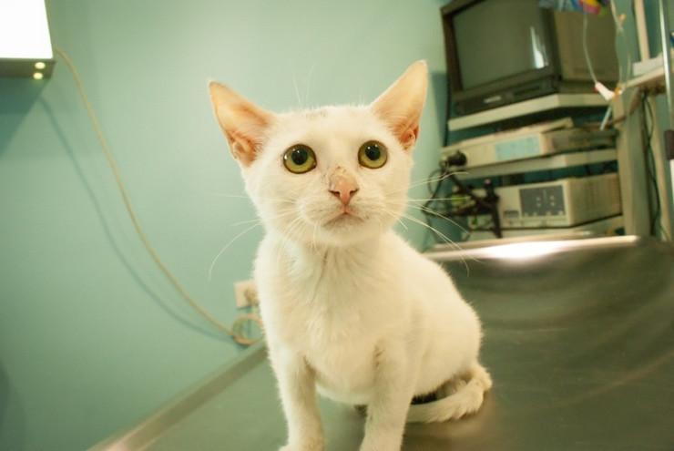 Mačke pod velikim stresom luče pljuvačku