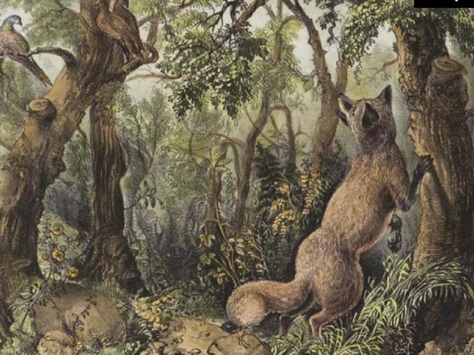 Da li imate GENIJALAN UM? Odgovor zavisi od jednog pitanja- koliko životinja vidite na ovoj slici?