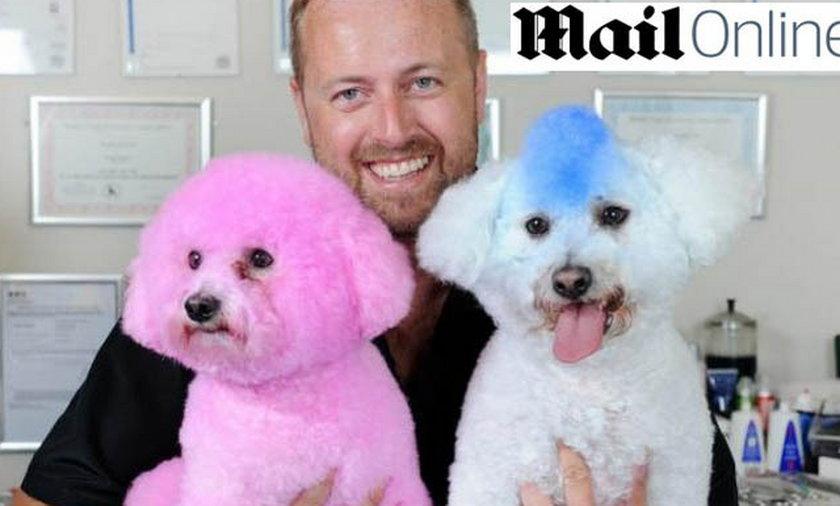 Farbowanie psów