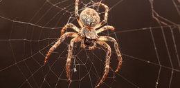 Boisz się pająków? Lepiej to przeczytaj