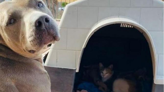 Pas čuva stražu