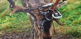 Co za okrucieństwo! Mieszkaniec wsi zrobił to dzikiemu zwierzęciu