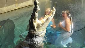 """""""Klatka Śmierci"""" (Crocosaurus Cove) w Australii pozwala turystom stanąć oko w oko z krokodylem"""