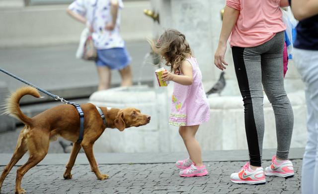 Pse bi trebalo šetati ujutro ili kasno predveče kada su niže temperature