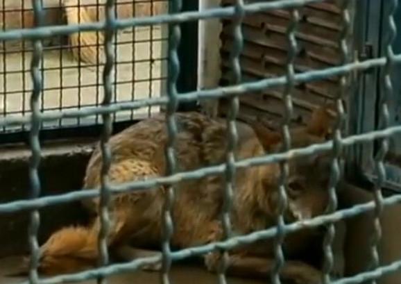 Coka u Beogradskom zoološkom vrtu