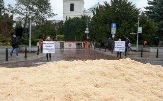 Greenpeace: Trociny przed Sejmem na znak sprzeciwu wobec ustawy dot. wycinki drzew
