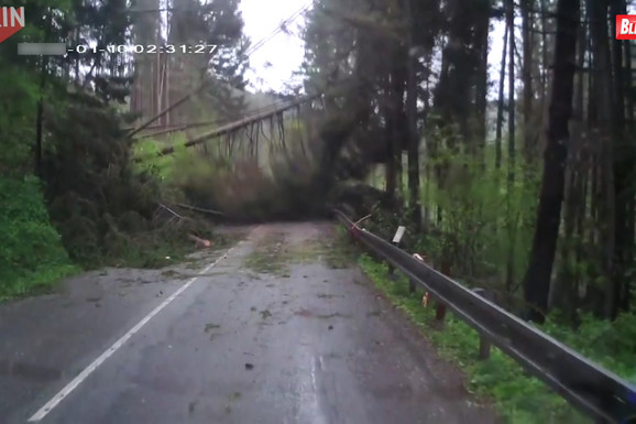 KAO U HOROR FILMU Vozili su kroz šumu, a onda je drveće počelo MISTERIOZNO DA PADA poput domina (VIDEO)