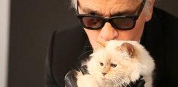 Ta kotka żyje lepiej niż niejeden z nas!