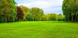 Marzysz o idealnym trawniku? Spróbuj tego!