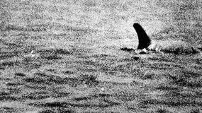 Potwór z Loch Ness - wielka mistyfikacja?