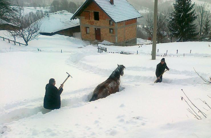 296008_vukicevici-pokusavaju-da-izvuku-konja-iz-snega