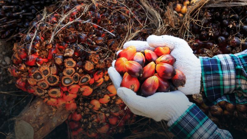 Olej Palmowy Tłuszcz Palmowy Właściwości Zastosowanie