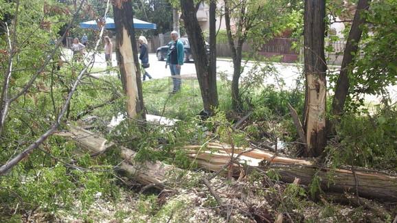 Drvo u koje je udario automobilom