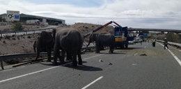 Wypadek ciężarówki z cyrkowymi słoniami