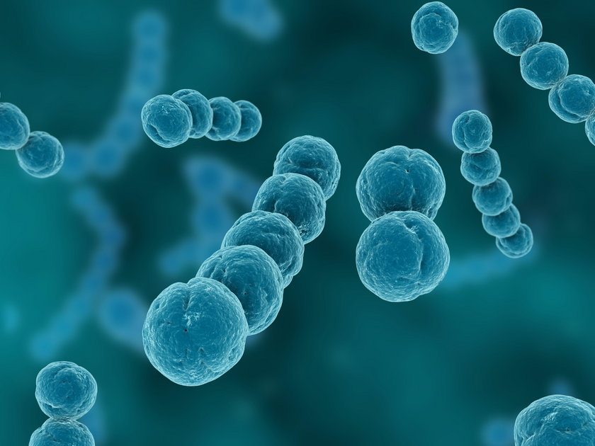 Sepsa to stan zapalny całego organizmu, wywołany przez bakterie – na przykład paciorkowce (na zdjęciu) – wirusy, pasożyty bądź grzyby.