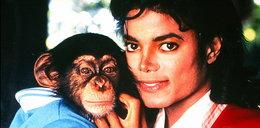 Szympans Michaela Jacksona zdycha w domu starców!