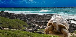 Zakaz odpalania petard i fajerwerków na Galapagos