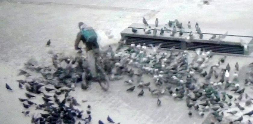 Tak wjechał rowerem w gołębie, że je pozabijał. Krakowski monitoring uwiecznił kuriera i go wytropiono