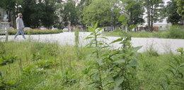 Park Sienkiewicza w Łodzi po remoncie do naprawy. Ile dopłacimy?