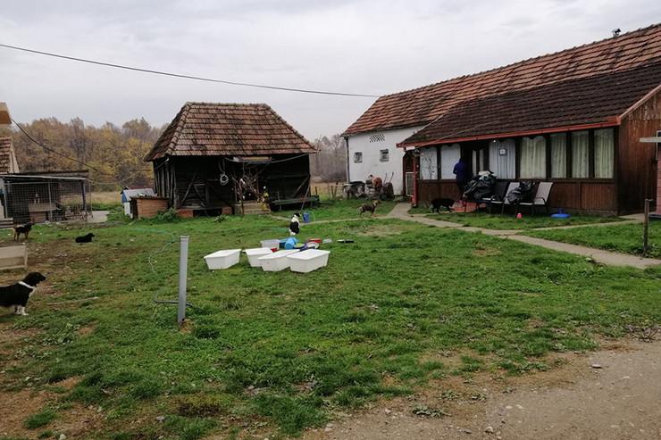 Prihvatilište-za-pse-Vesne-Lukić-foto-Cvijeta-Kovačević