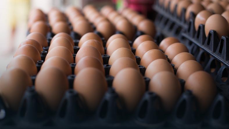 Fipronil w jajach pochodzących z polskich ferm z Mazowsza i Wielkopolski