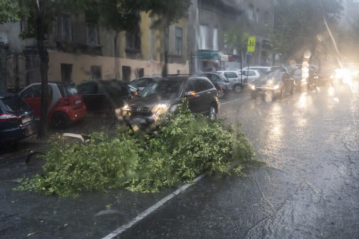 grana drveta pala na ulicu
