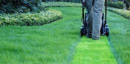 Marzy ci się bujny i soczyście zielony trawnik? Z tym sprzętem to możliwe!