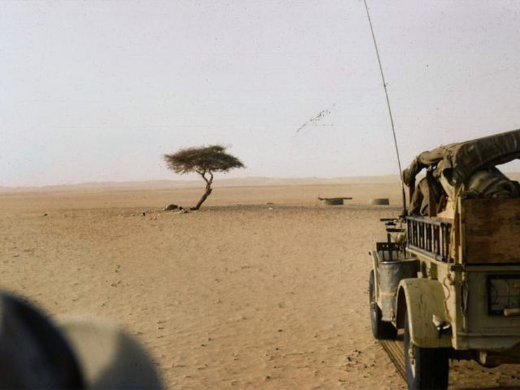 Drvo Tenere, Niger