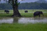 monsun indija