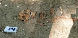Szczątki żołnierzy na Westerplatte. Naukowcy chcą zrekonstruować ich twarze