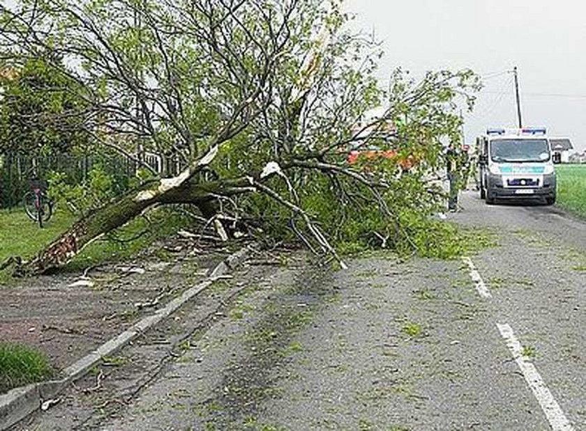 Drzewo przygniotło przechodnia. Przeżył!