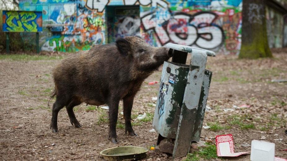 Ludzkie śmieci pułapką dla zwierząt.