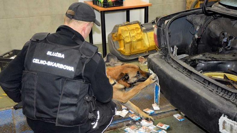 Funkcjonariuszom pomagał pies Argo
