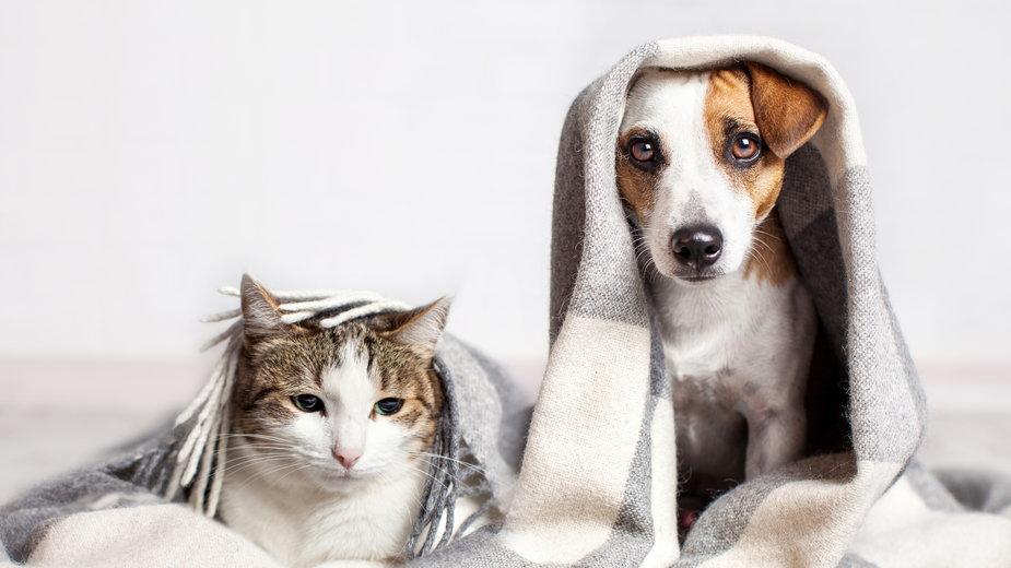 Zabawki dla psa i kota