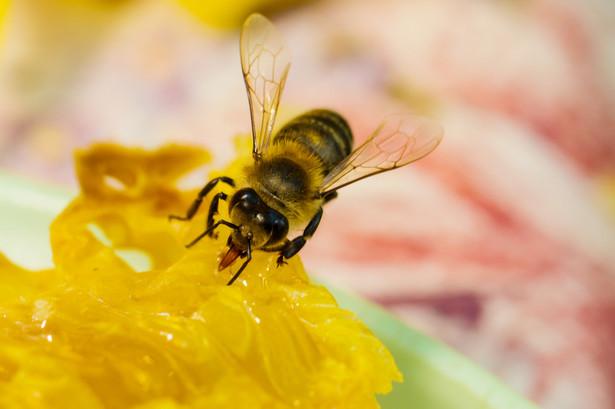 Polscy i europejscy pszczelarze chcą, by KE wprowadziła obowiązek etykietowania miodu tak, by konsument wiedział, w jakim kraju został on wyprodukowany. Tani, importowany miód, zwłaszcza z Chin, powoduje nieopłacalność produkcji w Europie.