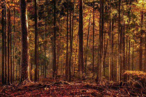 Obecnie kwota środków z Funduszu Leśnego dla parków narodowych jest uznaniowa.