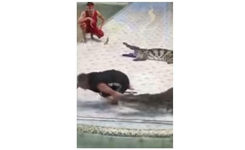 Treser wsadził rękę w paszcze krokodyla