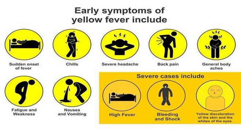 The early and severe symptoms of Yellow Fever explained
