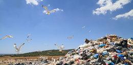 Ekspert: Ochronę środowiska zmieniono w patologię handlu kwitami